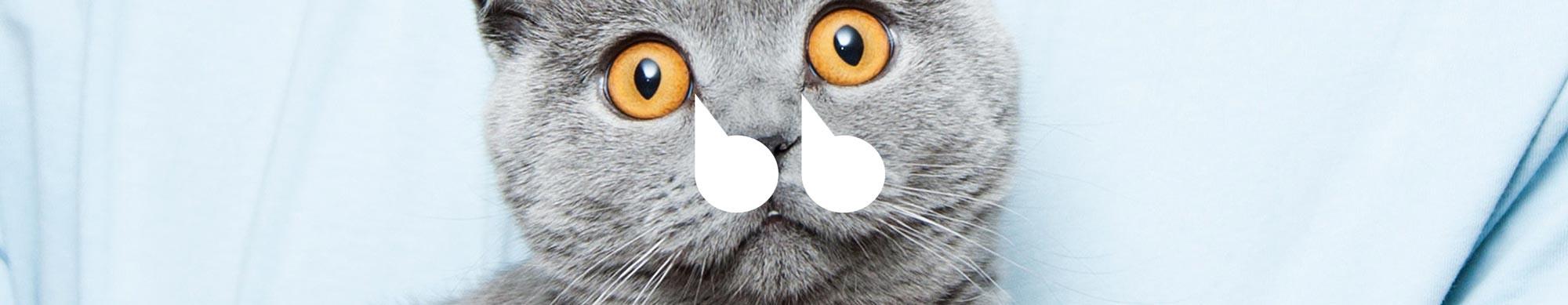 5 expresiones en inglés relacionadas con los gatos