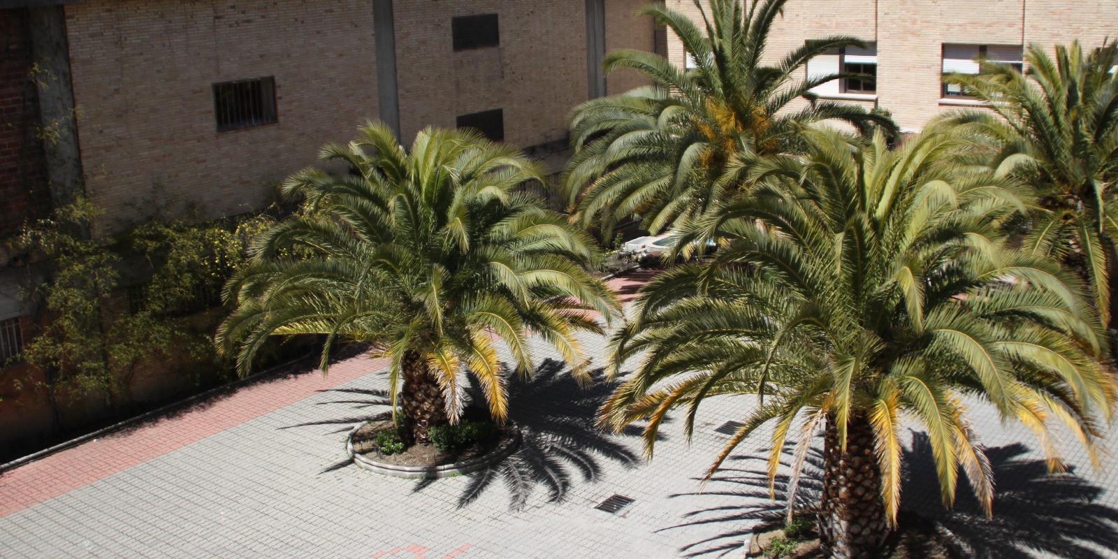 Campamento de Verano Urbano en Inglés en Colegio La Salle Sagrado Corazón (Mirasierra)
